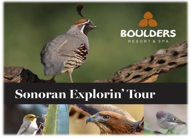 Sonoran Explorin Tour